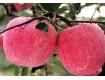 冰糖心红富士苹果产地价格陕西红富士苹果基地膜袋红富士苹果批发